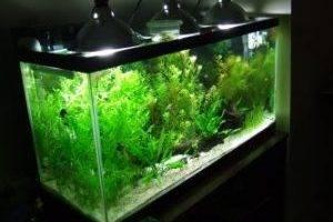 Освещение для аквариумных растений