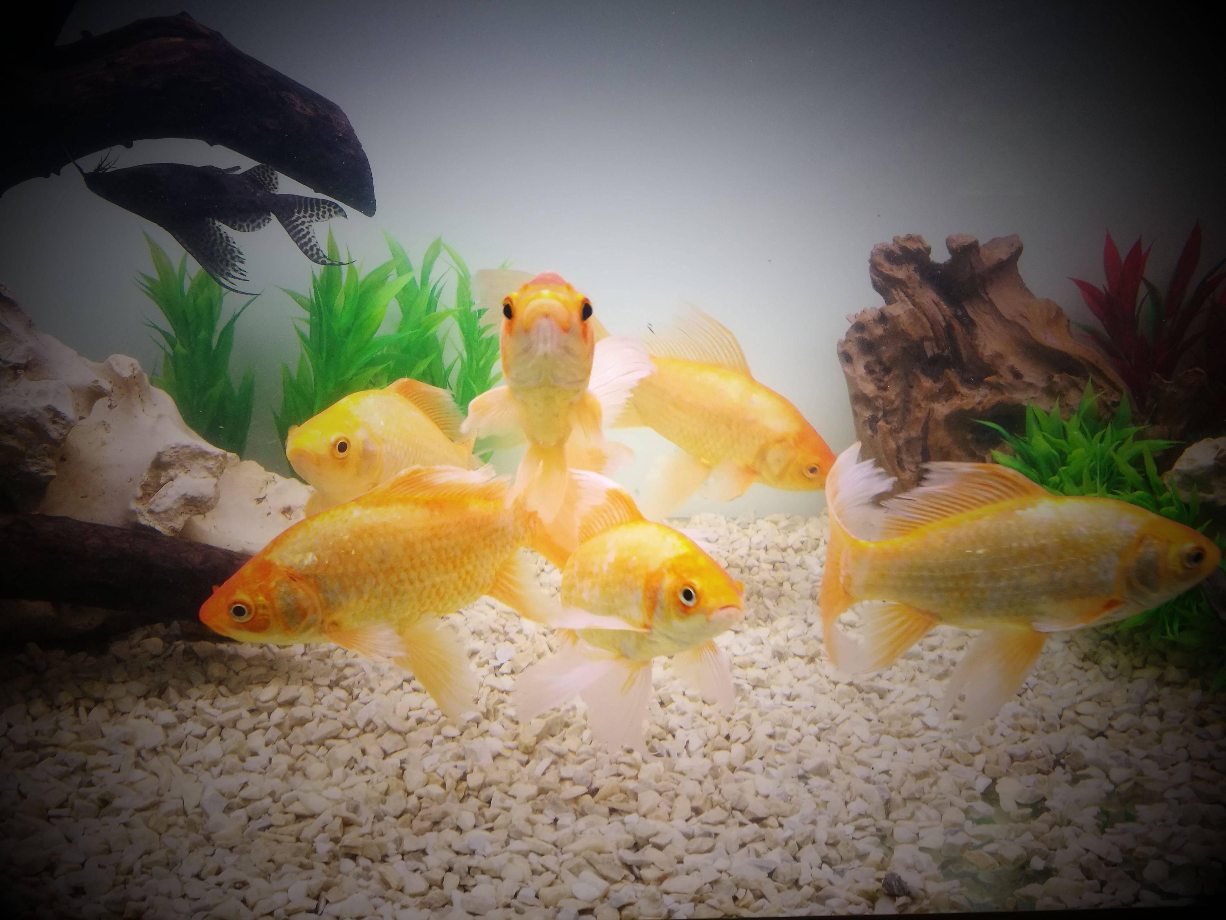 Переселяем рыбок