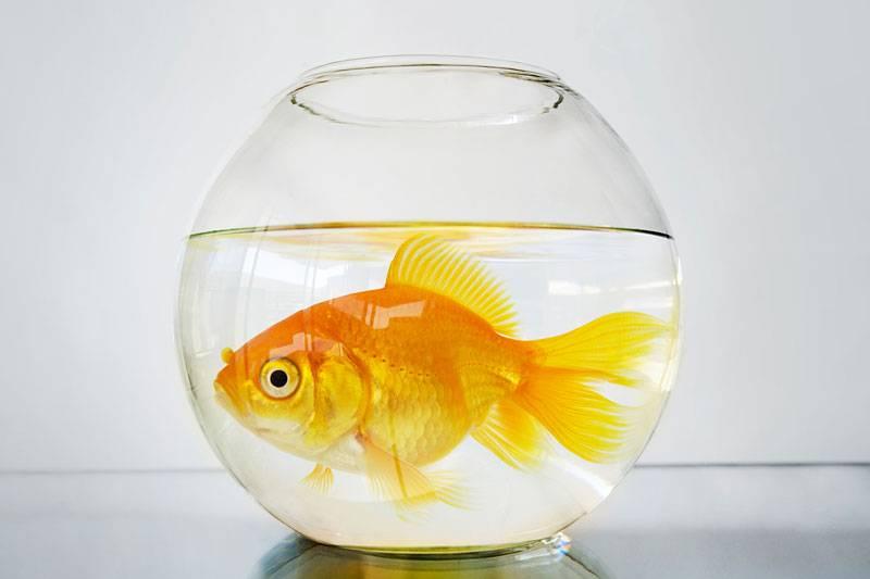 Рыбки в банке на врем перезапуска