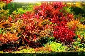 Разбавим дизайн аквариума немного красным цветом