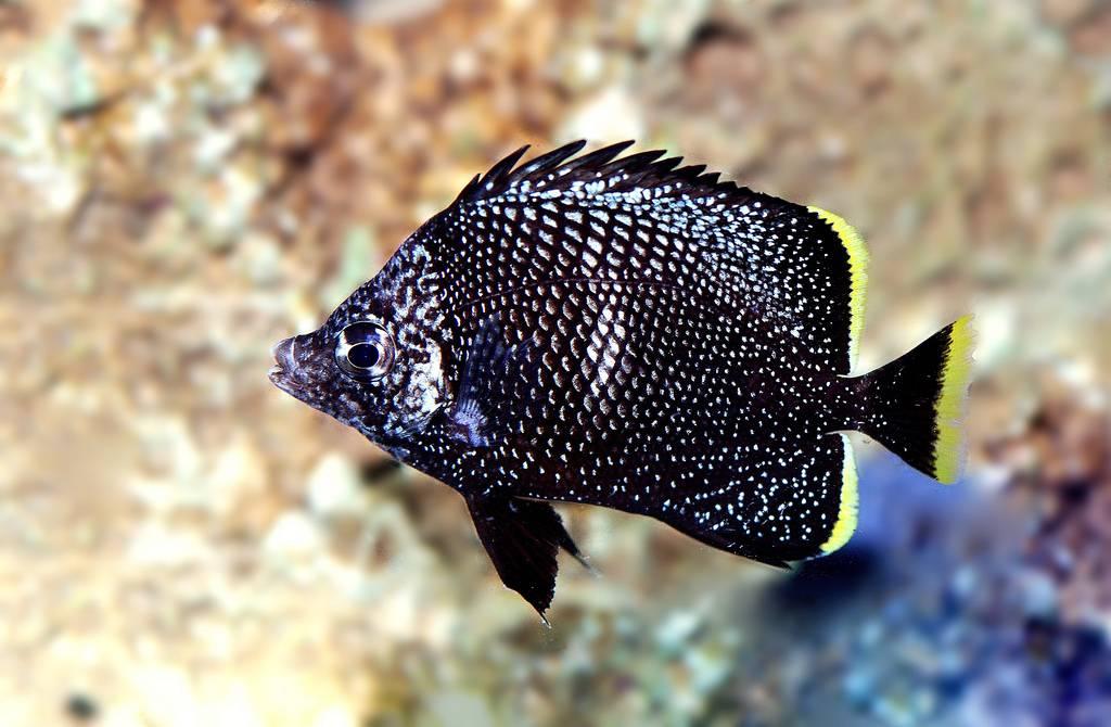 Выкованная из железа рыба-бабочка