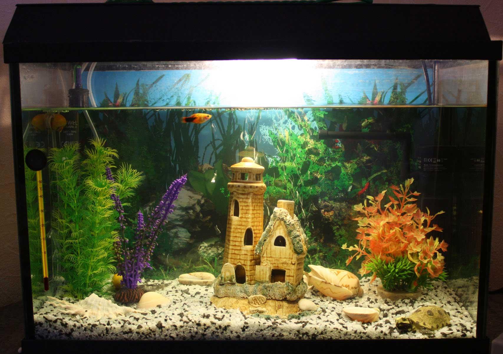 Красиво оформленный аквариум