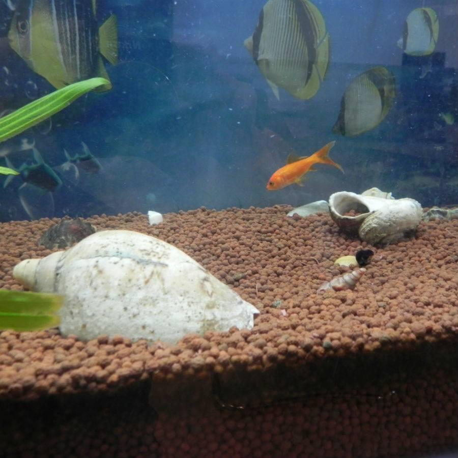 Красивый грунт для аквариума