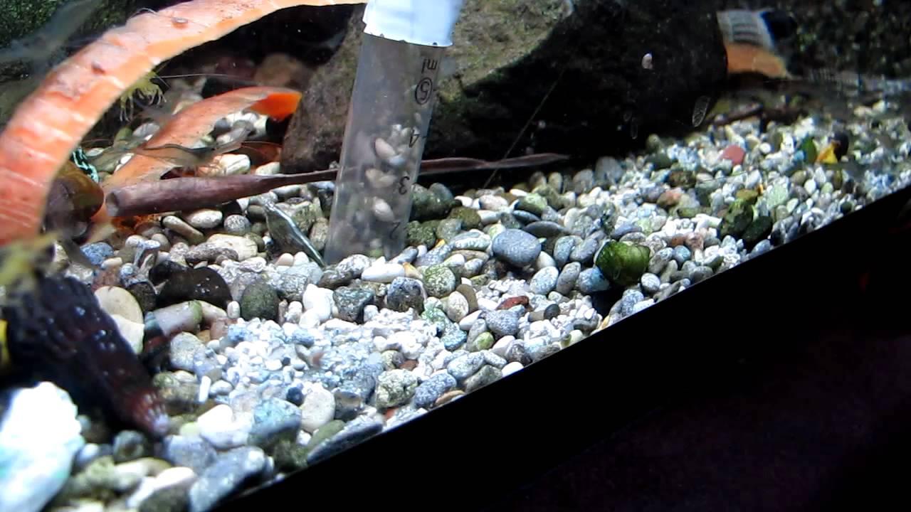 Уход за аквариумным субстратом