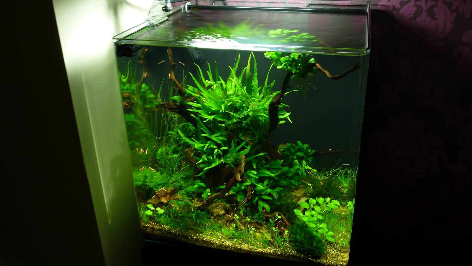 Dennerle Scaper's Tank Complete Plus аквариум