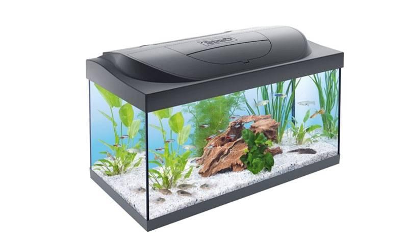 Tetra аквариум
