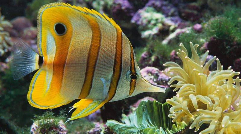Самые дорогие аквариумные рыбки