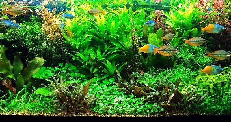 Травник - аквариум для растений