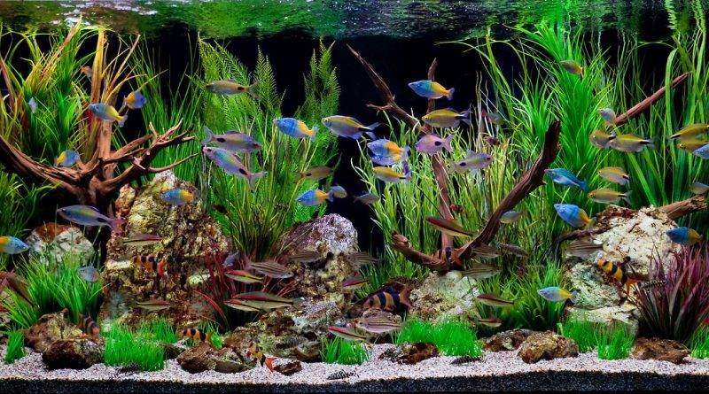 Как правильно помыть аквариум с рыбками