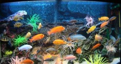 Правильная замена воды в аквариуме