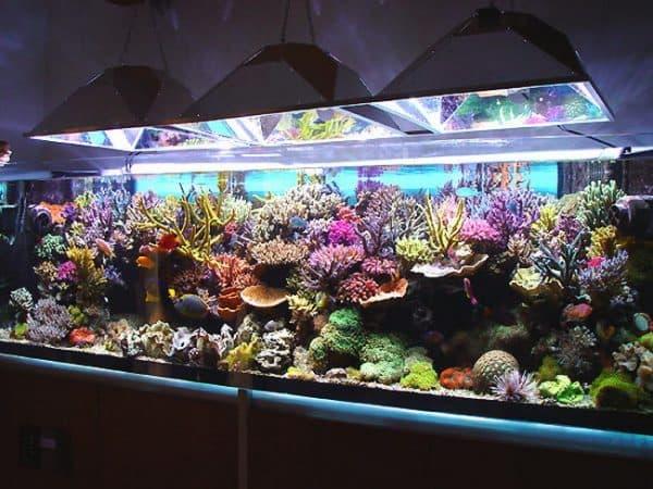 Большой красивый аквариум