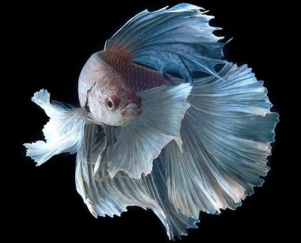 Сколько живут рыбы в аквариуме