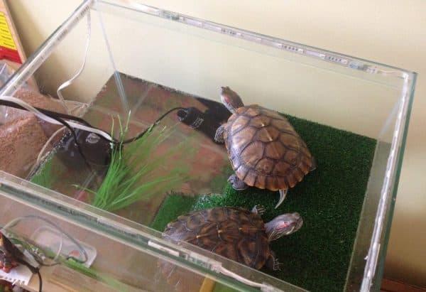 Аквариум для красноухой черепахи читайте статью