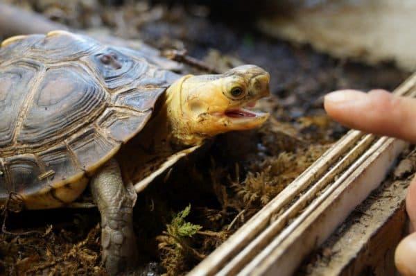Что ест черепаха в домашних условиях