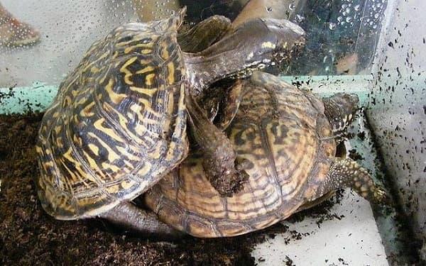 Уход за черепахой в домашних условиях