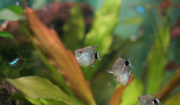 Филомена в акваримуме