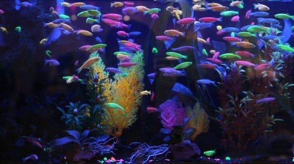 Светящиеся рыбки в аквариуме