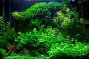 Растения и грунт