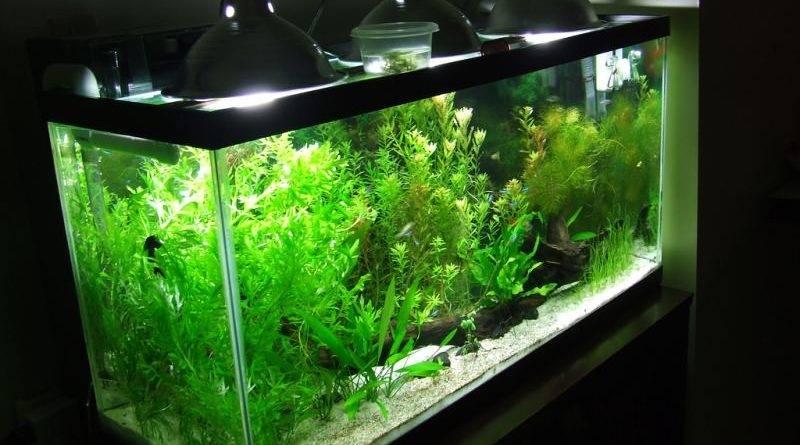 Какие лампы подходят для аквариума с растениями