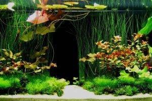 Основные методики заполнения аквариумов