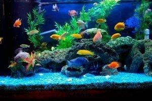 На что рекомендуется обращать внимание при приобретении рыбок для домашнего аквариума?