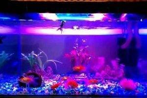 Специальные аквариумные лампы
