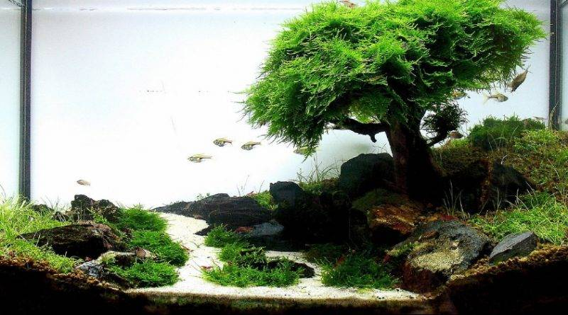 Как сделать декорации для аквариума