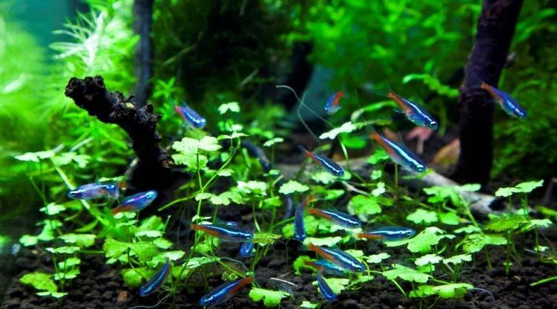 Рыбки для наноаквариума