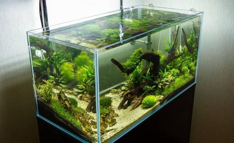 Бескаркасный аквариум из оргстекла