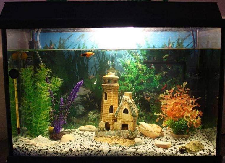 Красивый аквариум с гротами