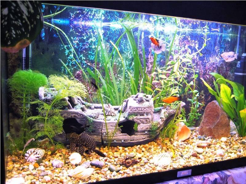 Красивый акваскейп