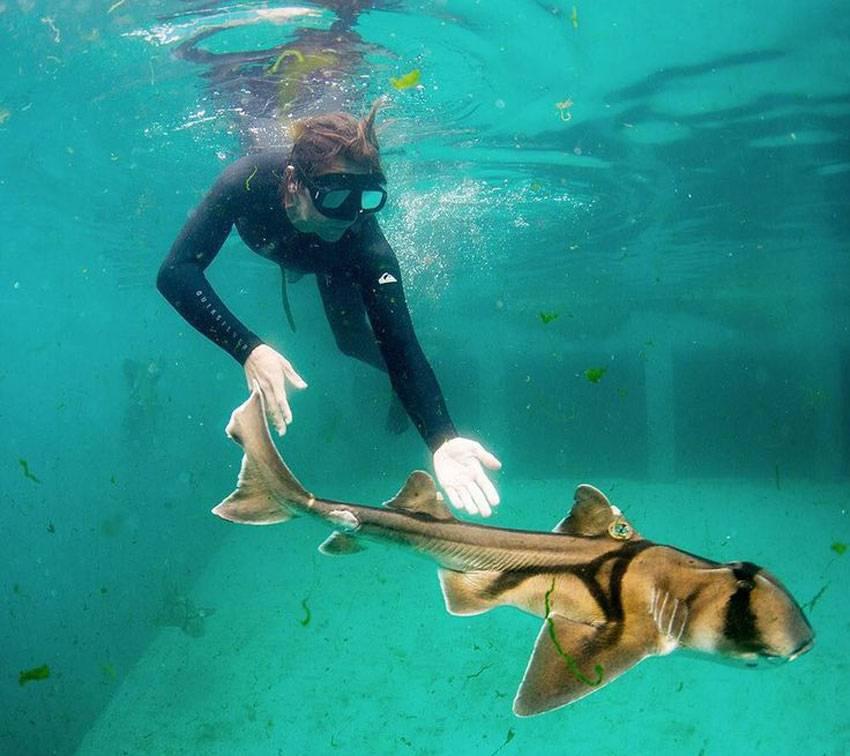 Рогатая акула