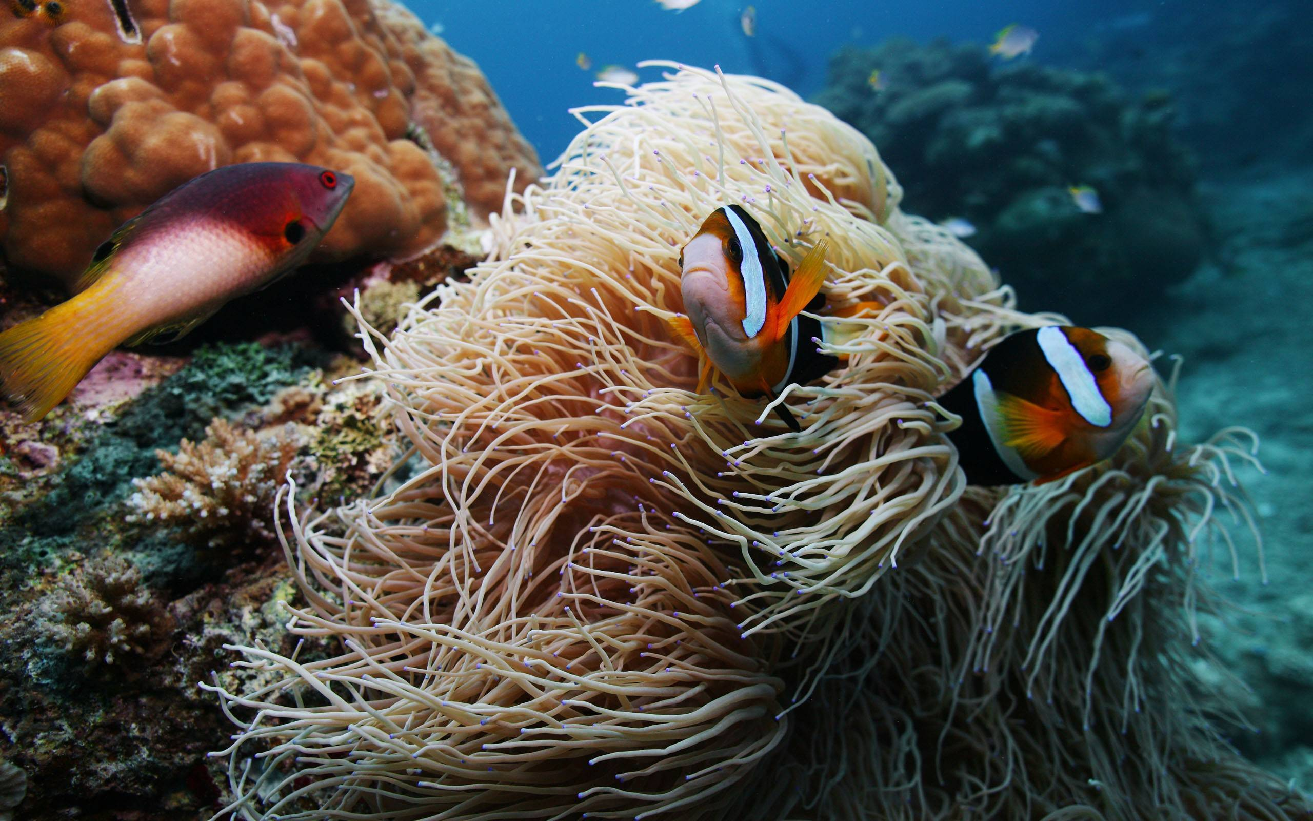 Рыбки в природных условиях