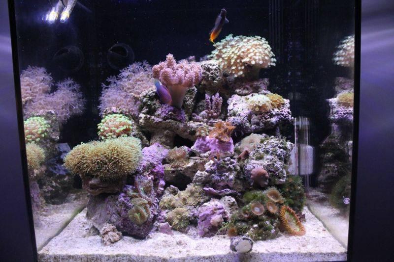 Aqua Medic Blenny (Морской аквариум)