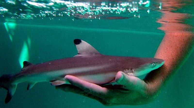 Аквариумные акулы