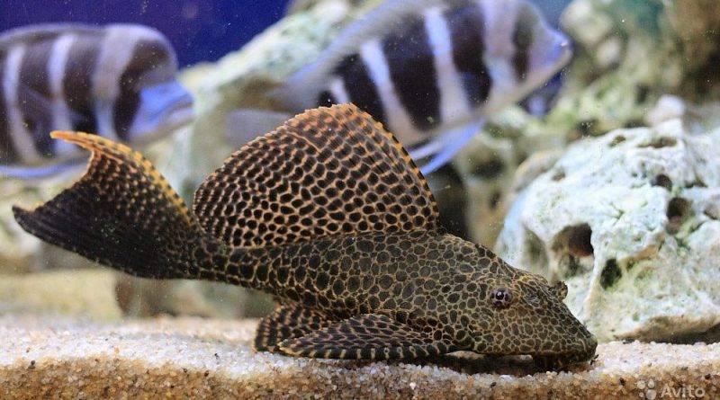 Санитары аквариума
