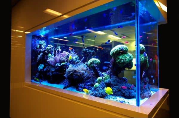 Большой аквариум для рыбок