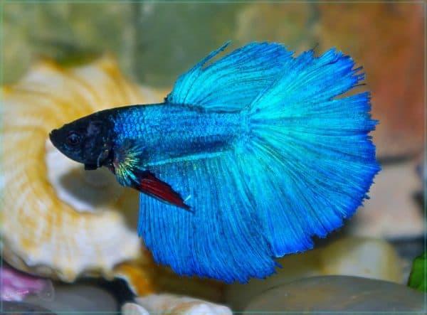 Как ухаживать за аквариумными рыбками читайте статью