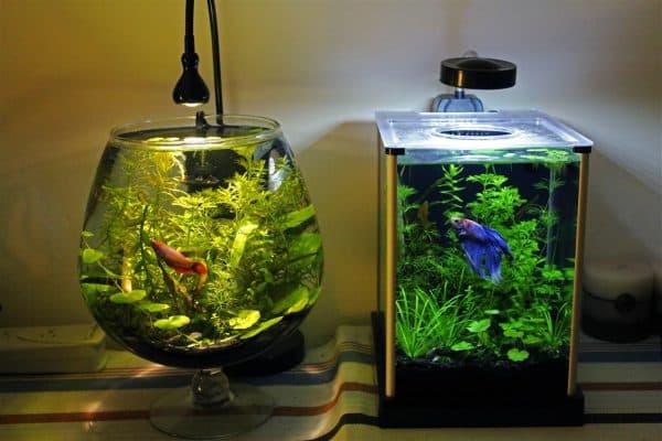 Маленький аквариум для рыбок читайте статью