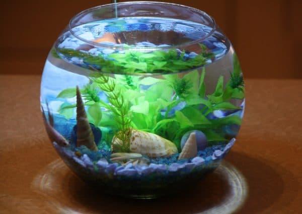 Маленький аквариум для рыбок