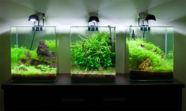 Растительность для наноаквариума