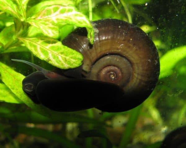 Катушка аквариумная