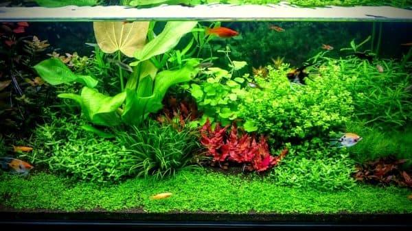 Лучшие аквариумные растения для начинающих читайте статью
