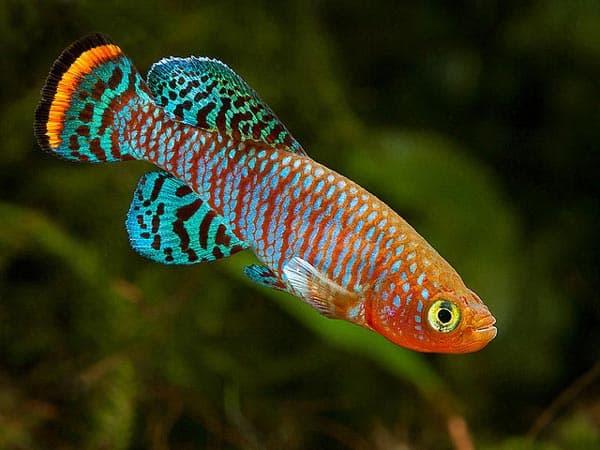 Живые рыбки с Алиэкспресса читайте статью