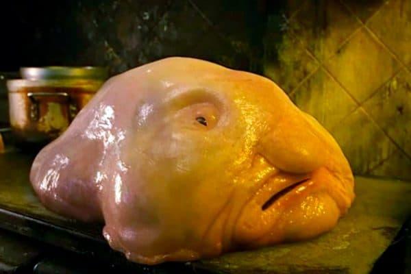 Рыба-капля - изумительная рыбка