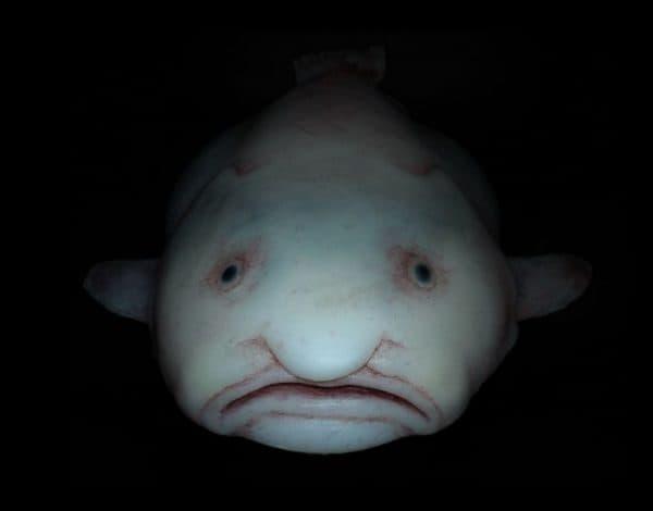 Рыба-капля на фото