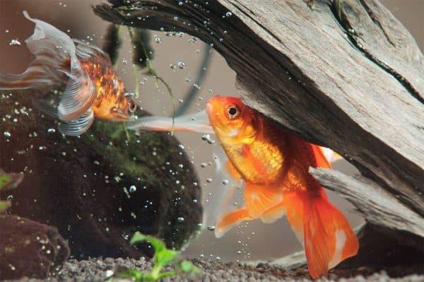 Как обезопасить обитателей аквариума