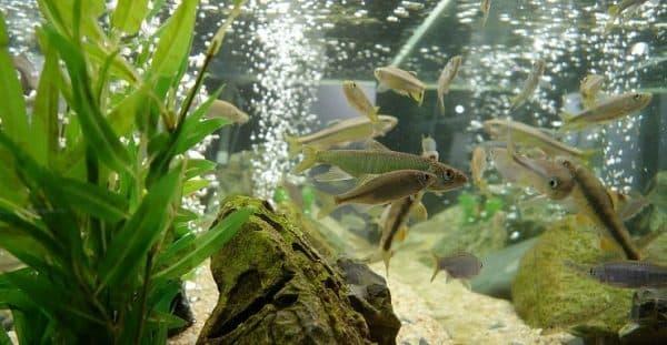 Отстаиваем воду для аквариума