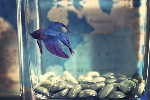 Аквариум на 10 литров каких рыбок можно заселять