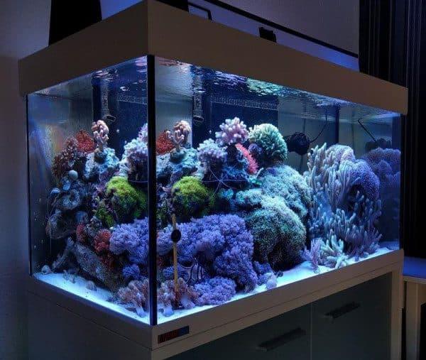 Достоинства и недостатки морских аквариумов